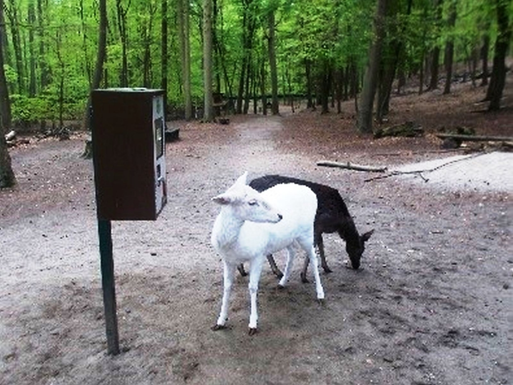 Eine schwarze und eine weiße Ziege, stehen vor einem Futterautomat.