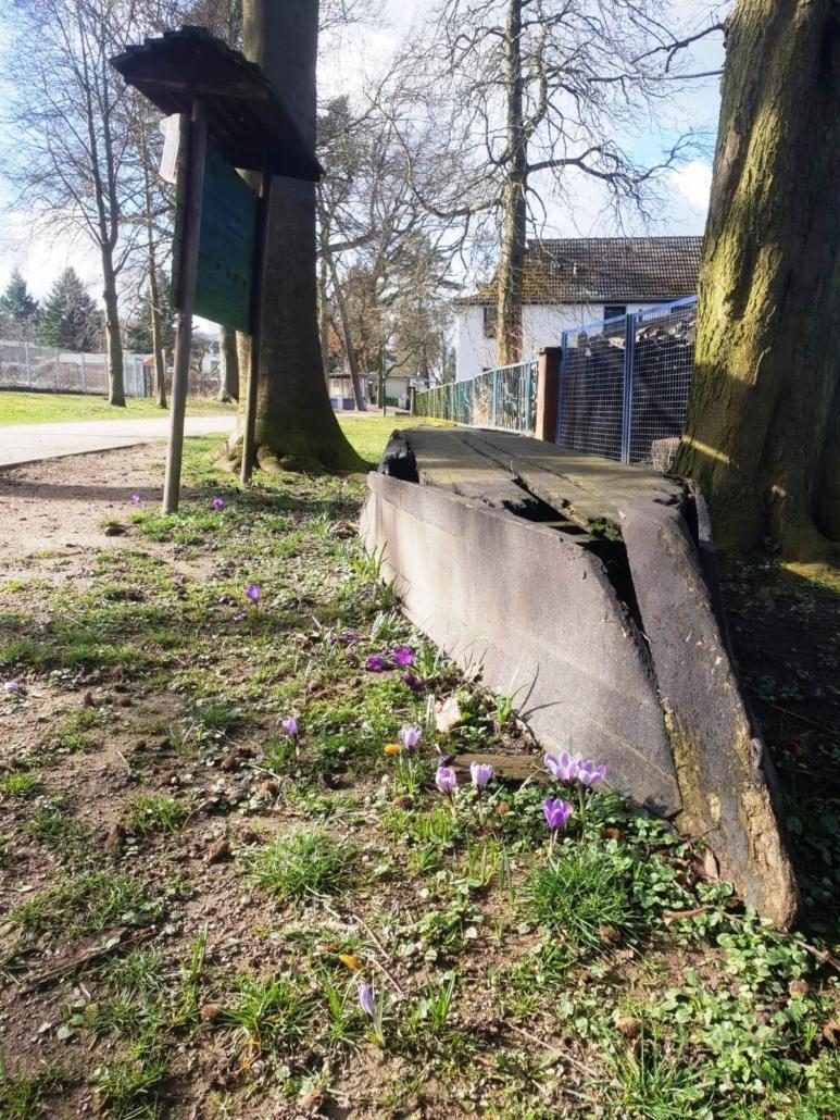 Vor einem Zaun liegt eine verwitterter Kahn. Um ihn herum blühen violette Krokusse.
