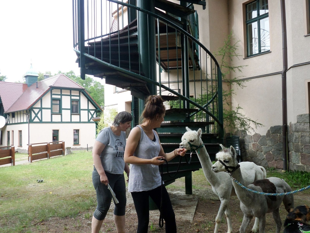 Eine Betreuerin und eine Bewohnerin nähern sich vorsichtig den beiden Alpakas, die ihnen zutraulich ihre Köpfe entgegen strecken.