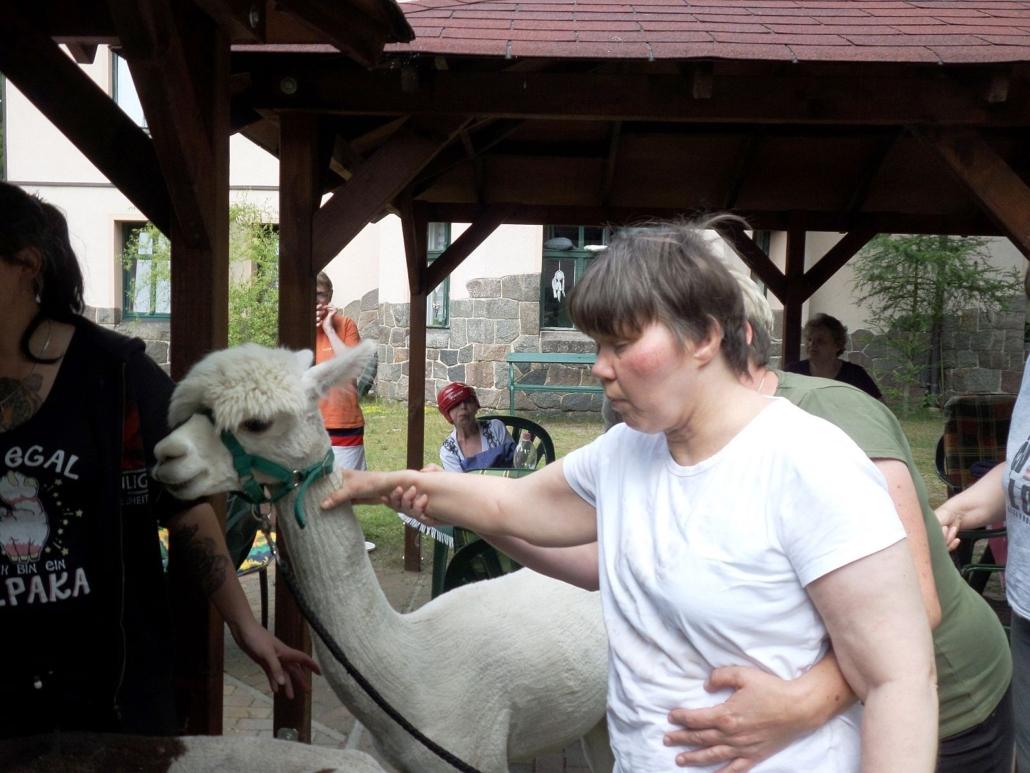 Vorsichtig streichelt eine junge Frau den Hals des weißen Alpaka. Eine Betreuerin unterstützt sie und führt ihr Hand.
