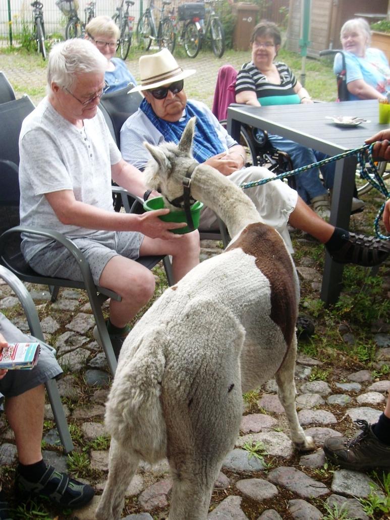 Mehrere Bewohner schauen zu, wie Karuso aus der grünen Futterschüssel frisst, die ein älterer Herr im Sitzen mit beiden Händen vor sich hält.