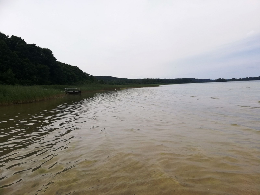 Ein Blick auf den Parsteinsee. Das Wasser sieht bräunlich aus. Das linke Seeufer ist bewaldet.
