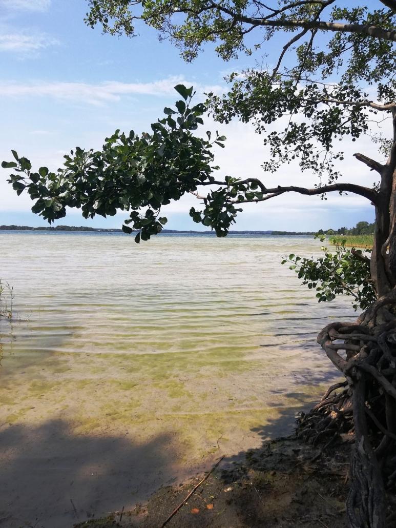 Unter dem Ast eines Laubbaumes hindurch hat man einen weiten Blick auf das gegenüberliegende Ufer des Parsteinsees. Das Wasser ist sehr flach.