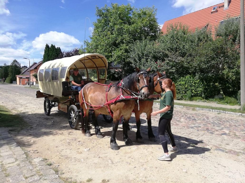 Der Kremser ist mit zwei braunen Pferden bespannt und steht auf einem befestigten Sandweg. Eine Mitarbeiterin hält die Pferde vorn fest.