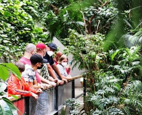 Die Besuchergruppe aus der FuBs steht an einem Geländer. Links und rechts von der Brücke/dem Weg wachsen üppige tropische Pflanzen.